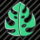 botany, exotic, leaf, monstera, palm, plant, tropical