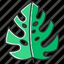 botany, green, jungle, leaf, monstera, plant, tropical