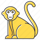 animal, exotic, macaque, monkey, primate, tropical, wildlife
