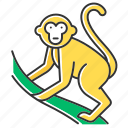 animal, climbing, exotic, monkey, primate, tropical, wildlife