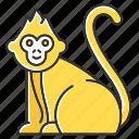 animal, baby, macaque, monkey, primate, tropical, wildlife