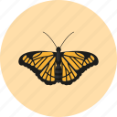 animal, butterfly, fly, insect, nature