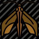 elephant, hawk, moth, animal, kingdom, caterpillar, insect