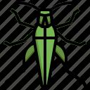 grasshopper, seasons, bug, nature, spring, animal
