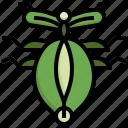 leaf, insect, ladybug, fly, animal