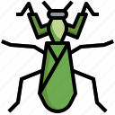 mantis, problem, nature, animals, bug