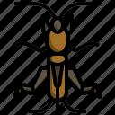 mole, cricket, zoology, leaf, insect, bugs, animals