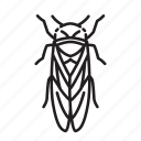 animal, bug, bugs, cicada, creature, insect icon