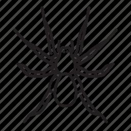 animal, bug, bugs, creature, insect, tarantula icon