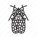 animal, bug, bugs, creature, insect, lace bug icon