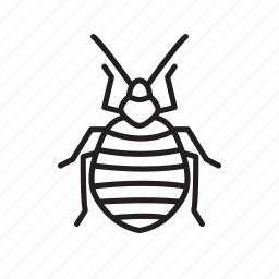 animal, bed bug, bug, bugs, creature, insect icon
