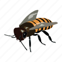 bee, bug, bumblebee, drone, insect icon