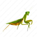 bug, grasshopper, insect icon