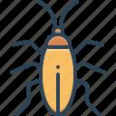 blattodea, bug, cockroach, creature, creepy, insect, prejudicial