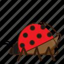 fly, insect, ladybug