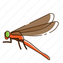 dragonfly, fly, insect