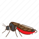 aedes, fly, insect, mosquito