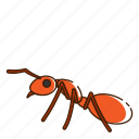 ant, fly, insect