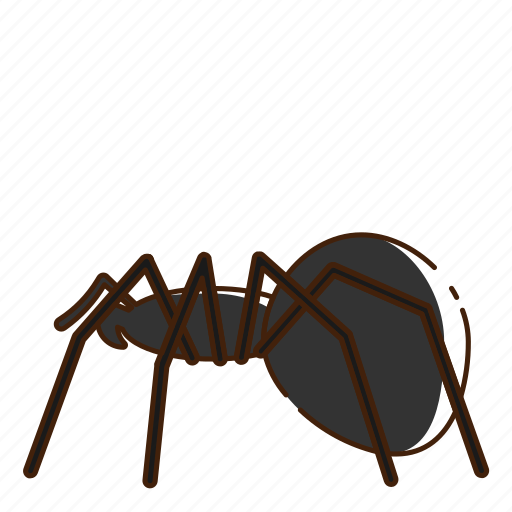 fly, insect, spider icon