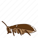 bug, cockroach, fly, insect