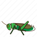 bug, fly, grasshopper, insect, locust icon