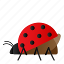 bug, fly, insect, ladybug icon