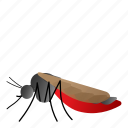 aedes, fly, insect, mosquito icon