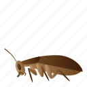 bug, cockroach, fly, insect icon