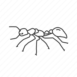 ant, bug, insect, king ant, mother ant, queen ant icon