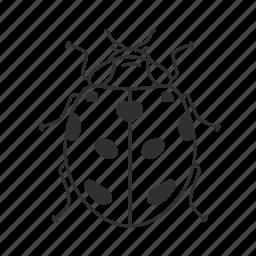 beetle, bug, flying insect, insect, lady, lady bug, ladybug icon
