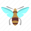 bee, bug, bumblebee, honeybee, insector