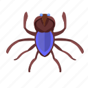 beetle, bug, insector icon