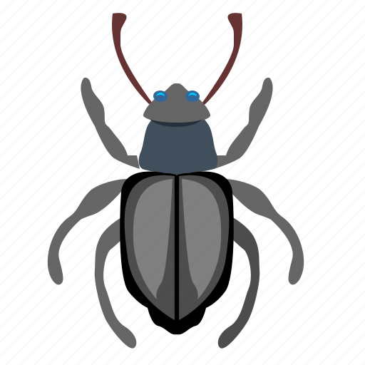 beetle, bug, insector, tipster icon