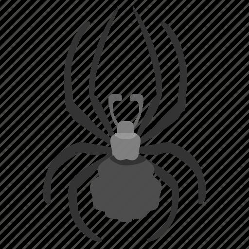 bug, insector, spider, tarantula icon