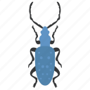 dung beetle, insect, prejudicial insect, scarab beetle, stag beetle icon