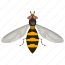 bumble bee, flying insect, honey bee, insect, wasp