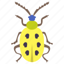 dung beetle, insect, prejudicial insect, scarab beetle, yellow beetle icon