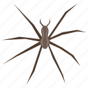 animal, arachnid, bug, insect, widow spider icon
