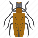 dung beetle, insect, prejudicial insect, scarab beetle, weevil beetle