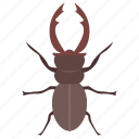 dung beetle, insect, prejudicial insect, rhinoceros beetle, scarab beetle icon