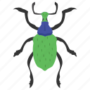 dung beetle, insect, prejudicial insect, scarab beetle, weevil beetle icon