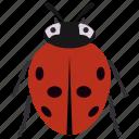 beetle, insect, ladybug, redbud, shield bug icon