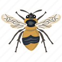 creepy insect, flying insect, housefly, insect, pest icon