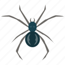 animal, arachnid, bug, insect, spider icon