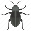 beetle, dor bug, insect, ladybug, shield bug icon