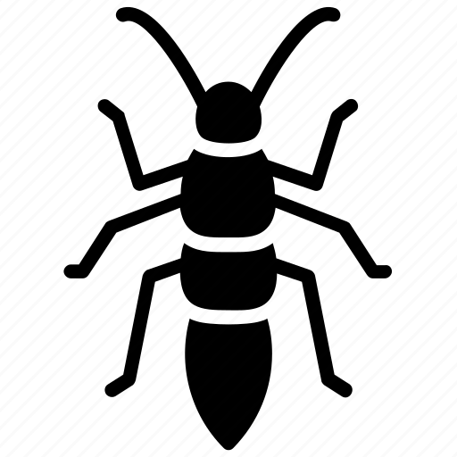 bush cricket, cricket insect, grasshopper, katydid insect, locust icon