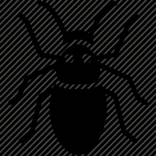 acari, bug, insect, parasite, pest icon