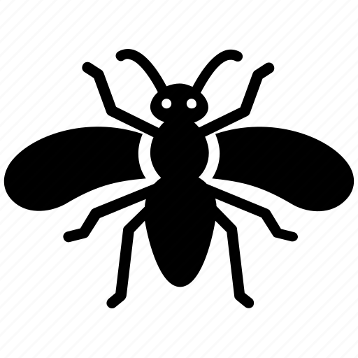 beetle, insect, shield bug, stink, stink bug icon