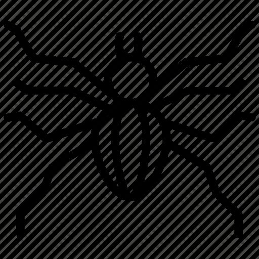 animal, arachnid, bug, insect, spider icon