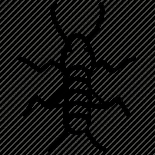 grasshopper family, insect, mole cricket, oecanthus, pest icon